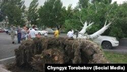 Кыргызстандагы шамалдын кесепеттери. Буга чейин тартылган сүрөт.