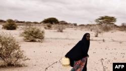 Кения. Когда-то здесь были плодородные пастбища