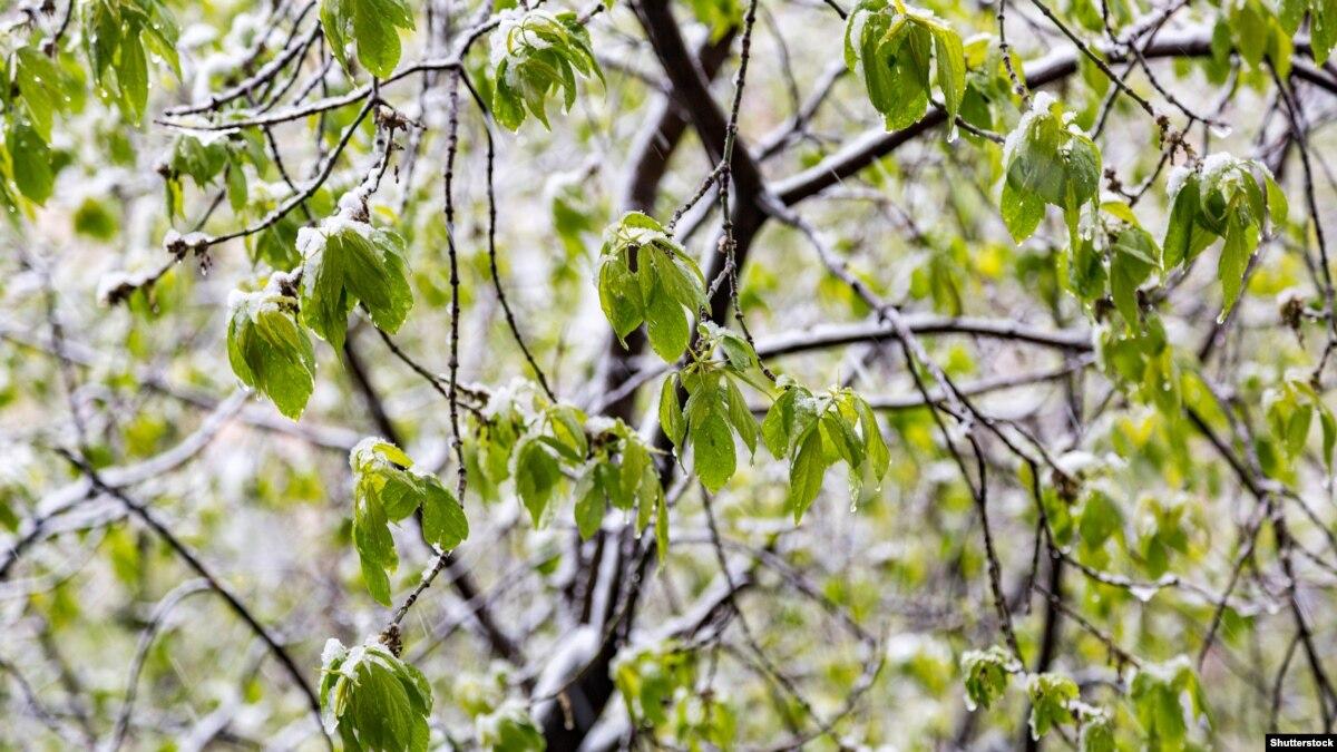 У ніч на 15 квітня очікуються заморозки – ДСНС