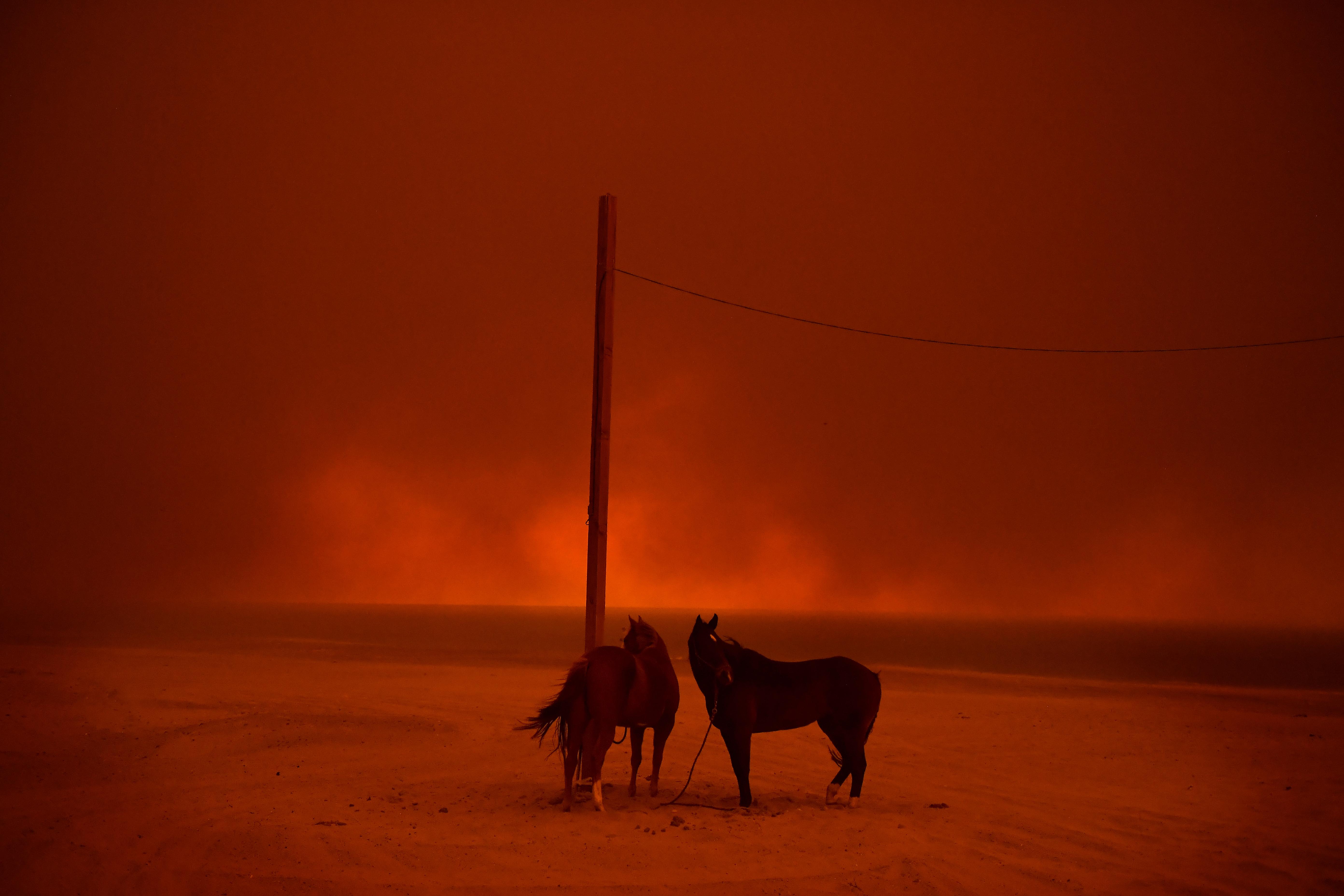 Климаттың өзгеруінің салдарынан...