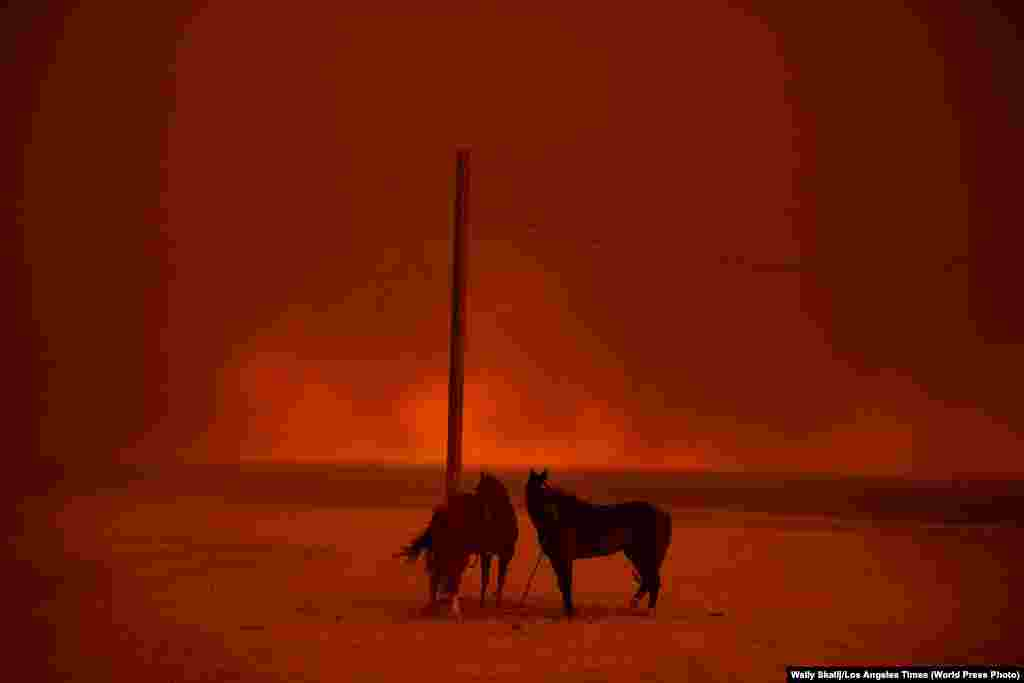 Evacuated horses stand tied to a pole, as smoke from a wildfire billows above them, on Zuma Beach, in Malibu, California on November 10, 2018. The 2018 wildfire season in California was the deadliest and most destructive on record, burning an area of more than 676,000 hectares. Environment: Second Prize, Singles - Wally Skalij, Los Angeles Times