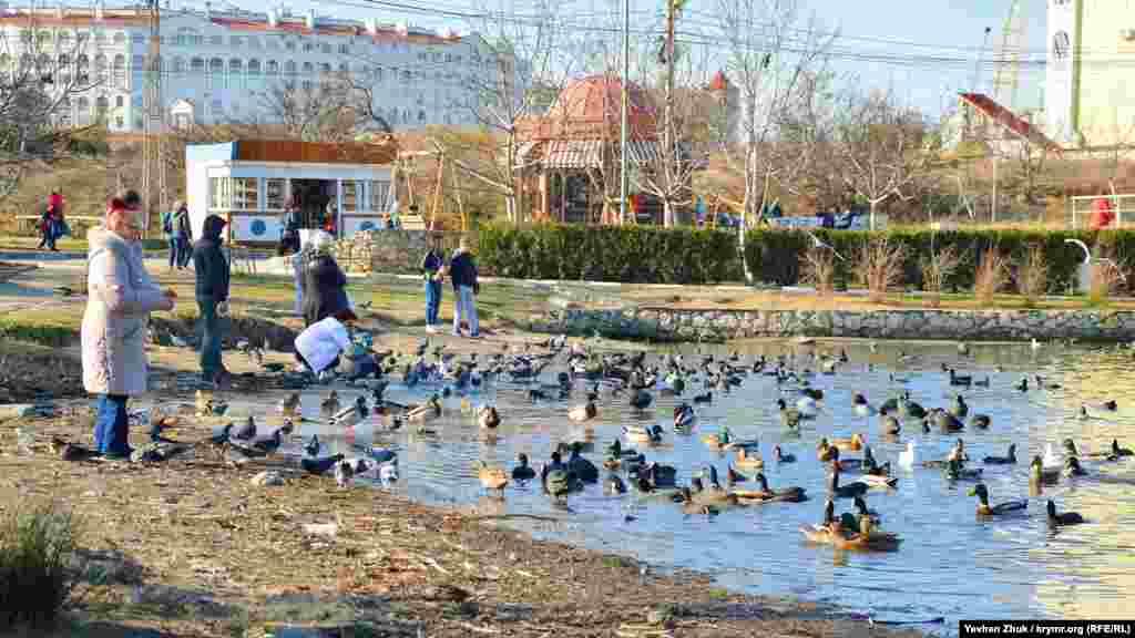 У входа на пляж «Омега» образовался настоящий птичий базар
