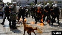 Yuanıstan, Afina. 5 oktyabr 2011. Loukanikos polislərlə üzbəüz