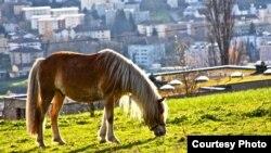 Лошадь на выпасе. Швейцария, 14 ноября 2010 года. Иллюстративное фото.