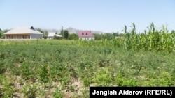 Фермерские хозяйства нуждаются в субсидировании. Иллюстративное фото.