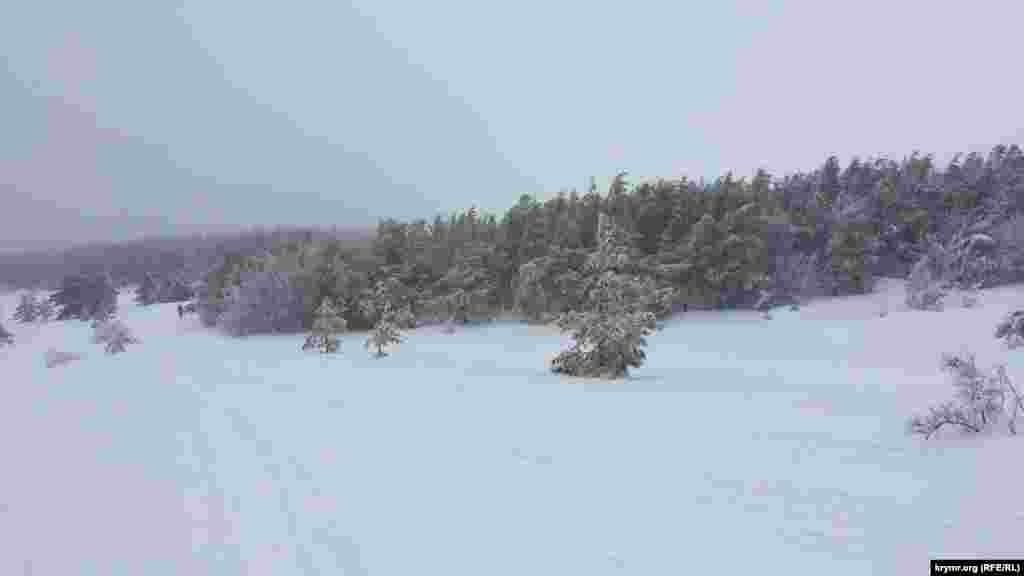 Есть и второй способ – экстермальный. На УАЗике пассажиров везут по лесу через Ялтинский горно-лесной заповедник