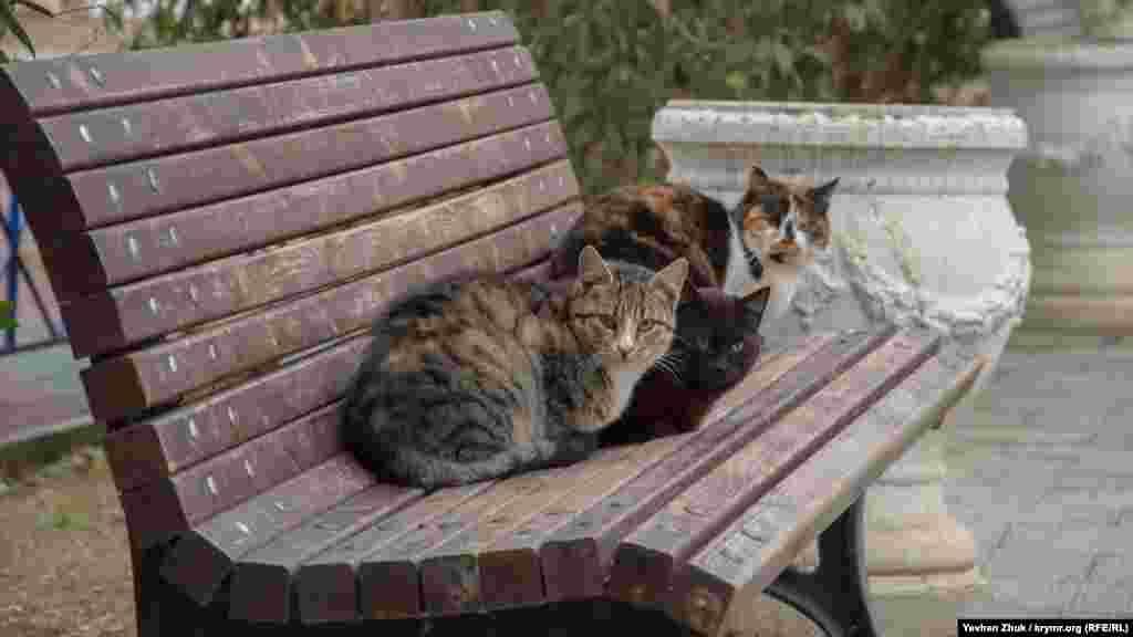 Кадыковские коты