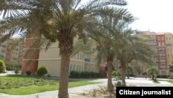 Из зелени только редкие пальмы
