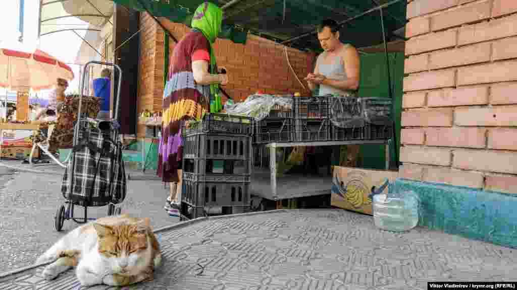 Кот відпочиває на місцевому ринку
