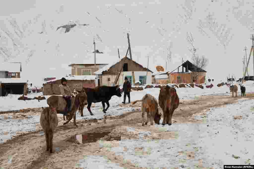В регионах массовый падеж скота из-за сильных морозов и голода.