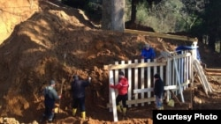 Аджарские правозащитники и экологи опасаются, что за тремя гигантскими деревьями в парк Иванишвили потянутся и другие многолетние растения