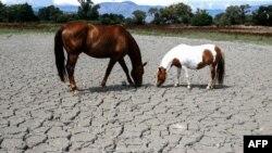 Засуха, иллюстративное фото