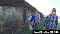 Волонтёр Юлия Асиновская. Кормление собак в питомнике с. Круглоозёрное, Западно-Казахстанская область, 21 мая 2015 года.