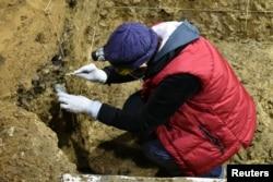 Взятие образцов ископаемых останков для ДНК-анализа