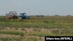 Техника в поле близ села Алгабас Мактааральского района ЮКО. Сентябрь 2015 года.