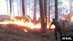 Yanğın nəticəsində meşənin 27 hektar sahəsi məhv olub
