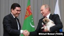 Президент Туркменистана Гурбангулы Бердымухамедов в 2017 году подарил президенту России Владимиру Путину ко дню рождения щенка алабая.