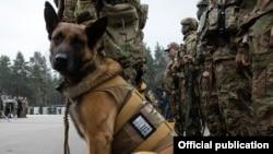 Служебная собака, иллюстрационное фото