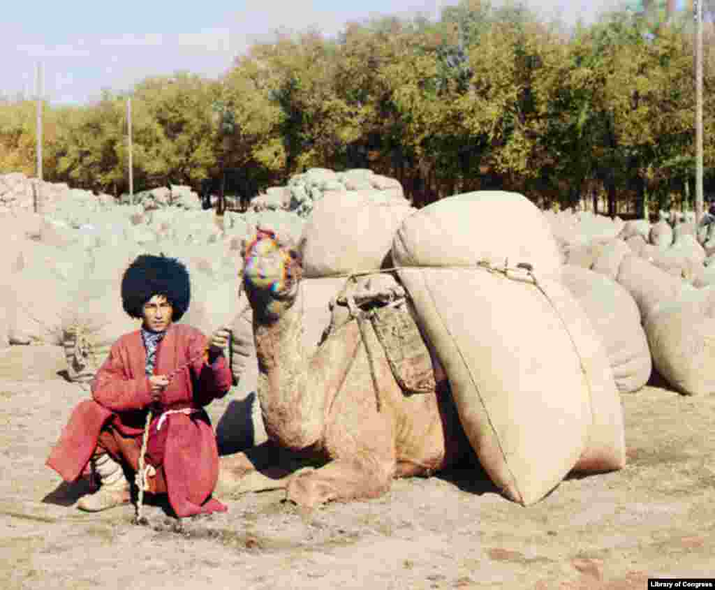 A Turkmen camel driver rests with his camel, most likely carrying grain or cotton. - Camel caravans remained the most common means of transporting food, raw materials, and manufactured goods in Central Asia well into the railroad era.
