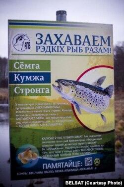 """""""ЗахАваем рэдкіх рыб разам!"""" - сумна жартуюць валянтэры"""