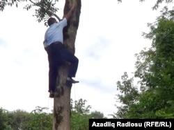 Ağac-çayxanaya qalxan sakin