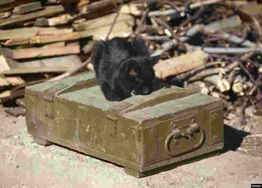 A cat lies on an ammunition box at a pro-Russian separatist position near Donetsk airport late last year.