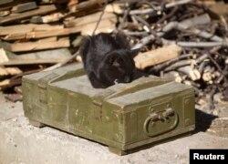 Кошка на ящике с боеприпасами в районе аэропорта Донецка
