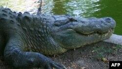 На крокодиловой ферме.