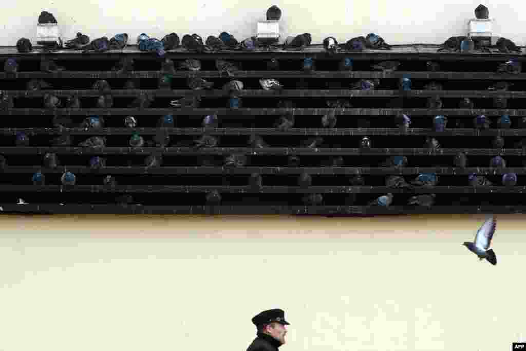 Pigeons warm themselves on a metro ventilation shaft in central Moscow.