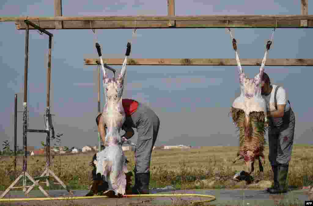 Butchers at a livestock market near Pristina, the capital of Kosovo
