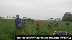 Українські заробітчани в Мазовецькому воєводстві, Польща