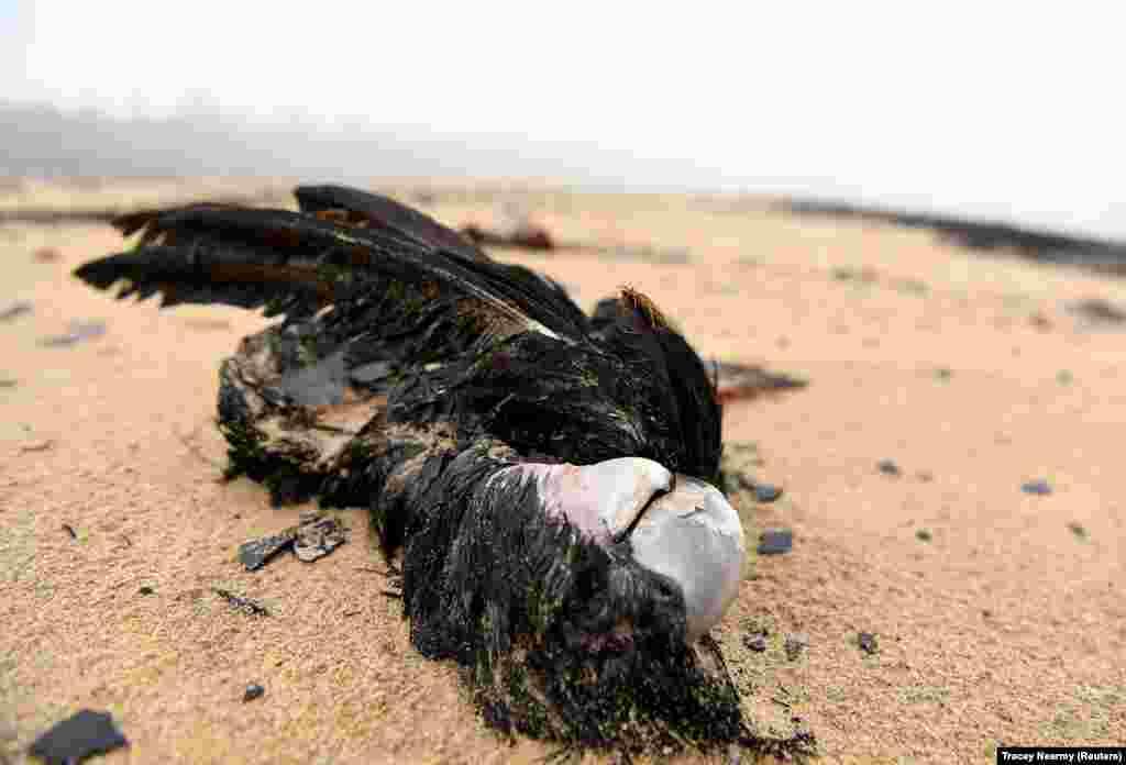 Мертвий птах на березі річки Нулліка в місті Іден