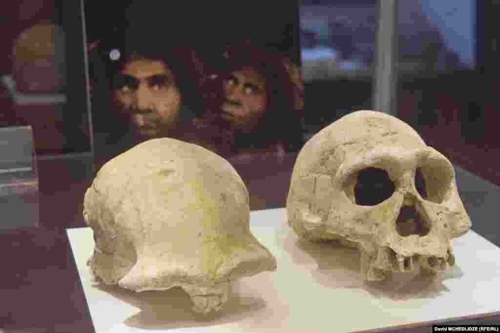 ზეზვასა და მზიას თავის ქალების მულაჟები დმანისის მუზეუმში