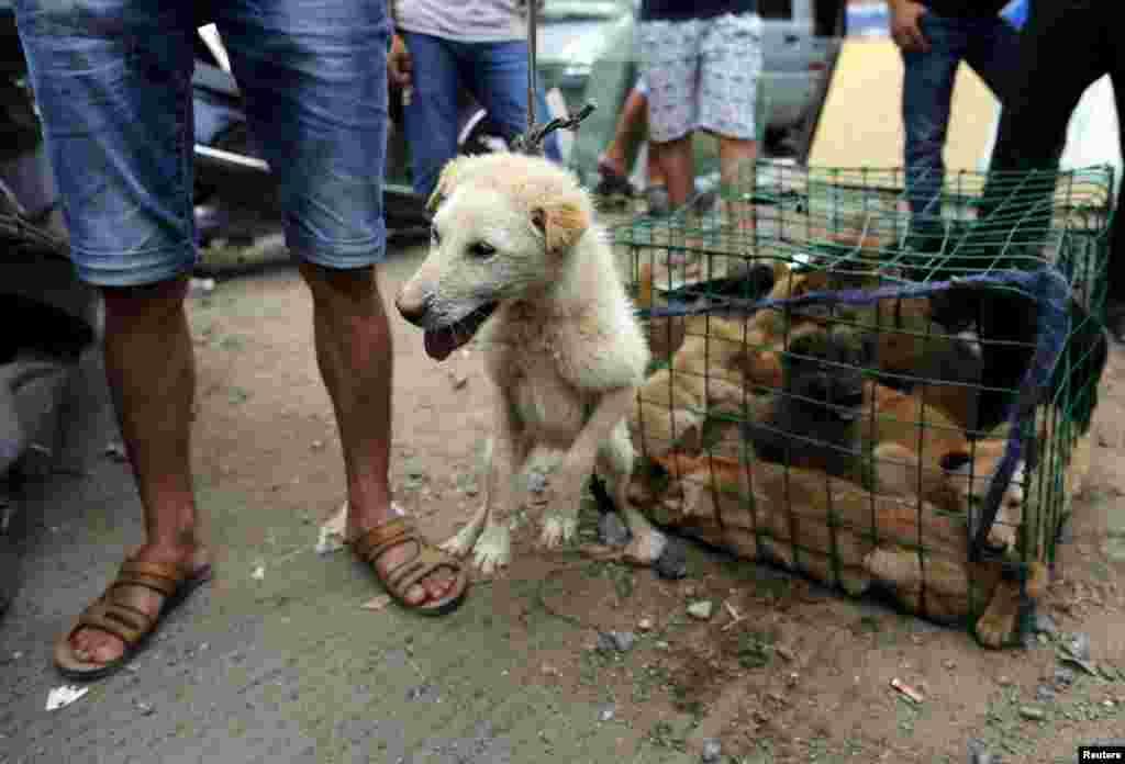 Первый Фестиваль в Юйлине состоялся в 2009 году. Организаторы уверяют, что поводом стала тысячелетняя традиция поедания собачьего мяса на территории Китая