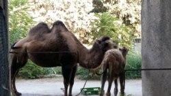 Azər Hüseynov AzadlıqRadiosuna deyir ki, onlar neçə illərdir zooparkın ərazisinin genişləndirməsinə görə əllərindən gələni edirlər