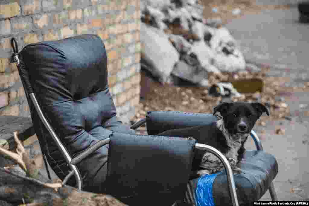 Пес, который живет на блокпосту при въезде в Авдеевку.