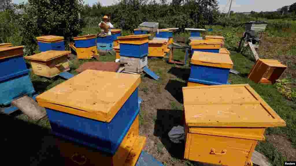Пчелы живут здесь в рамочных ульях