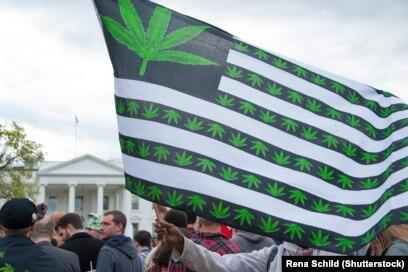Легализация марихуаны трамп в место табака марихуана