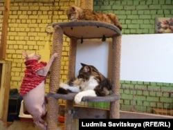 """Спасенные коты в приюте """"Зоозащиты"""""""