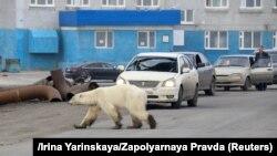 Бела мечка се појави во индустриската зона во градот Норилск