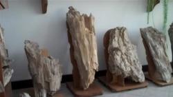«Кам'яний ліс Розточчя» повний таємниць