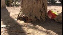 Çürük ağaclar Hövsan sakinlərini təhlükəyə atır
