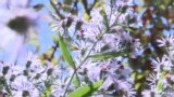 Ботаникалык бак жаңыланууга муктаж