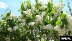 """В апреле и мае цветут деревья; дальше начинают """"пылить"""" различные травы"""