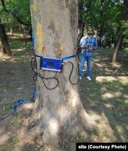 Tomograf pentru copaci
