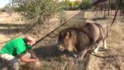 Парк львов «Тайган». Звериный бизнес (видео)