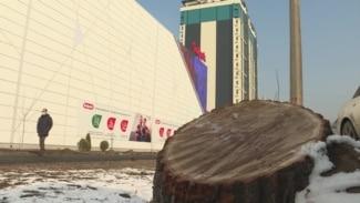 У торгового центра в Алматы вырубили деревья, занесенные в Красную книгу