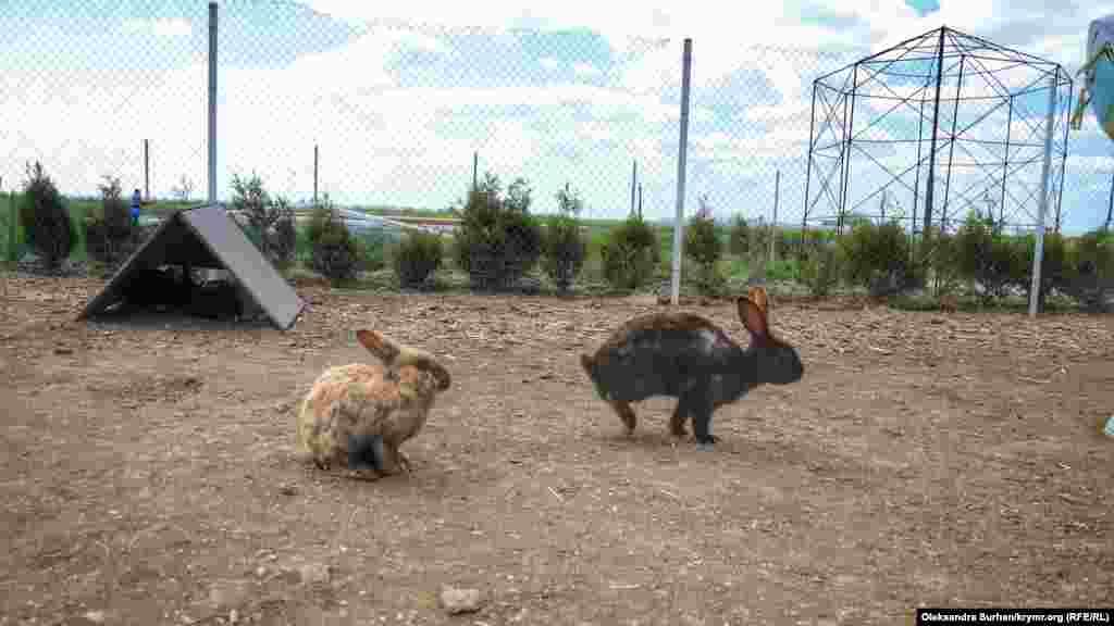 В парке есть поле, где кролики находятся в условиях, приближенных к природным. Они свободно перемещаются по территории