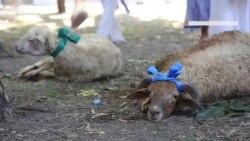 Перший день Курбан-байрам у Сімферополі (відео)