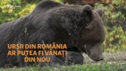 Urșii din România, la mâna parlamentarilor